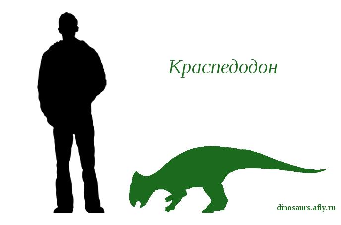 Краспедодон