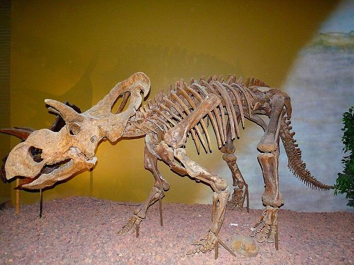 Скелет медузацератопса