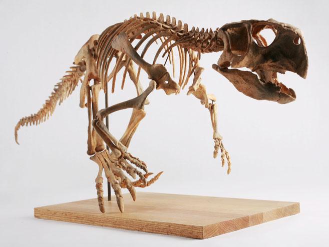 Скелет пситтакозавра