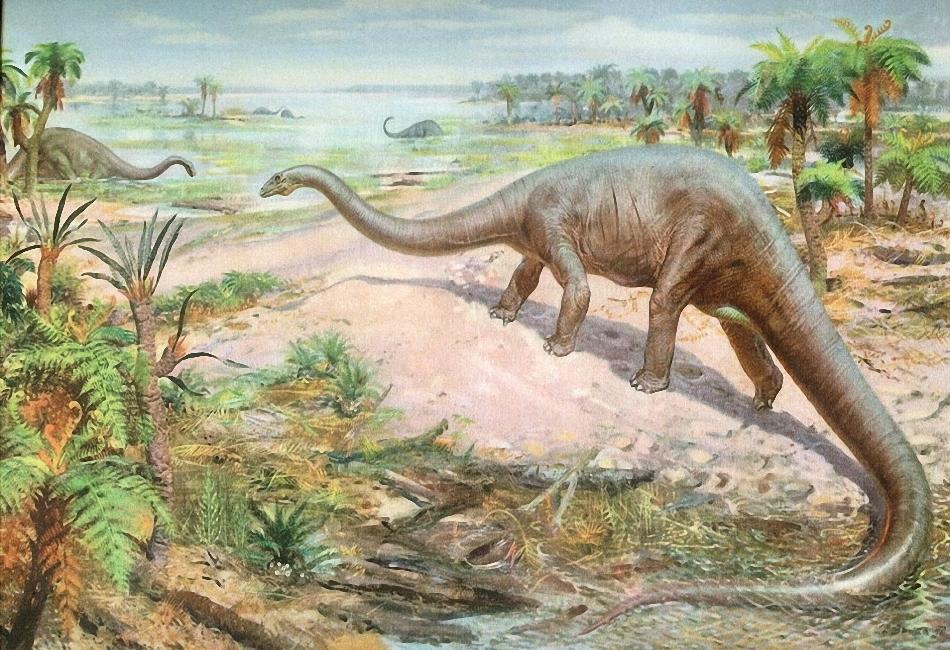 Картинки по запросу Диплодок динозавр фото
