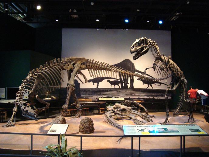 Скелеты камптозавра и аллозавра