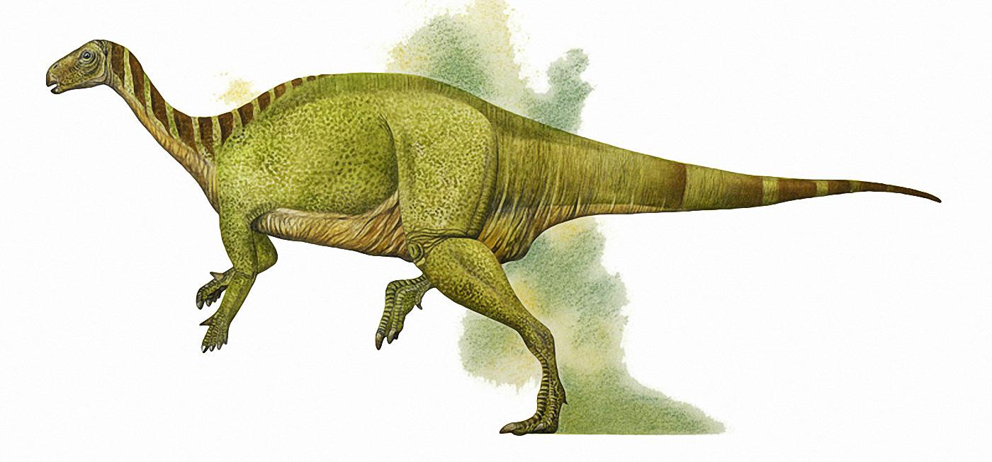 Картинки по запросу Камптозавр
