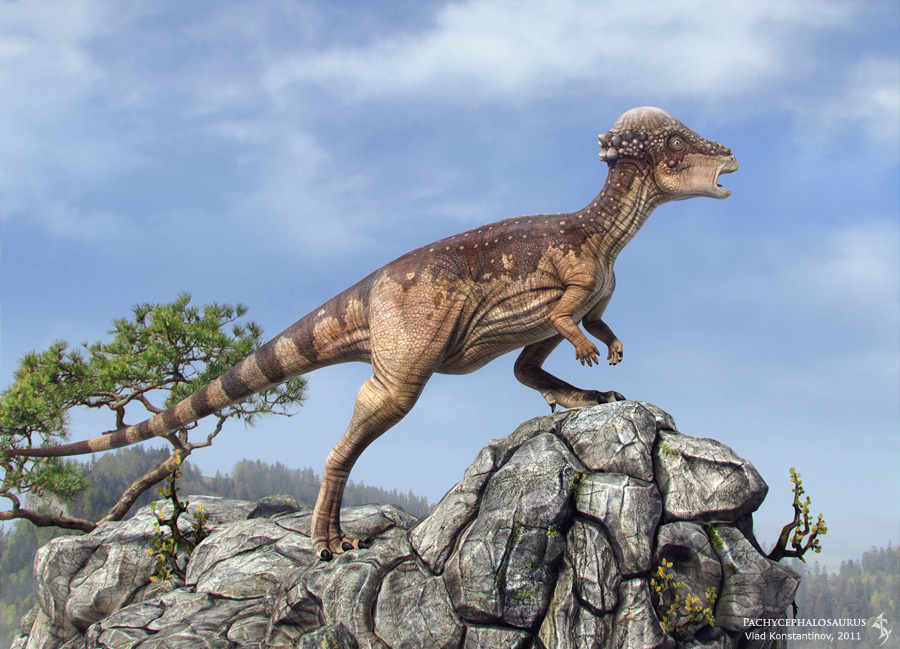 Картинки по запросу Пахицефалозавры