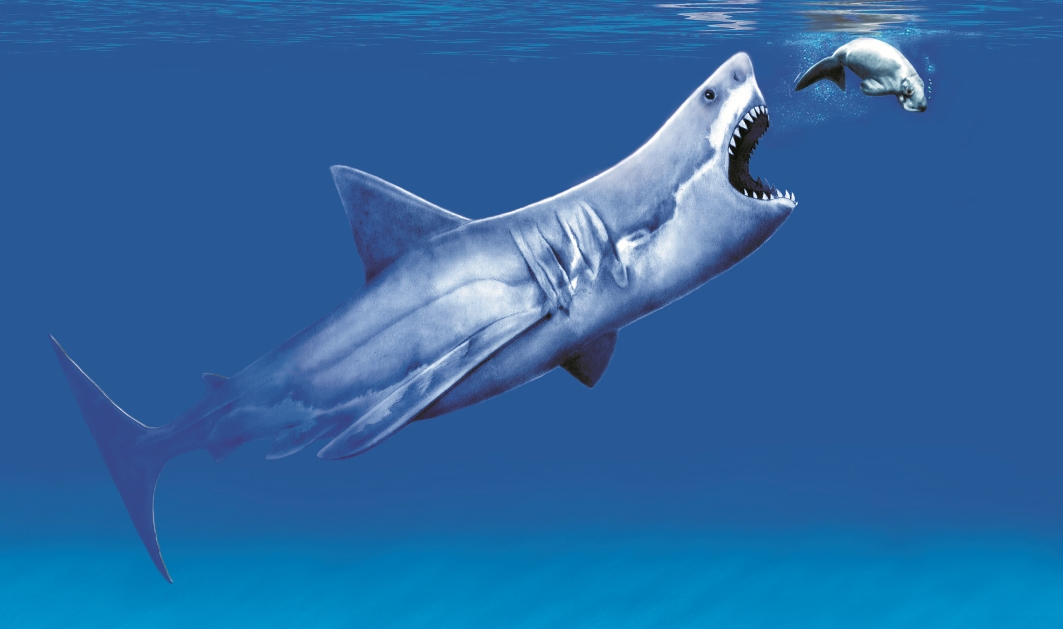 The gallery for --> Carcharodon Megalodon Maximum