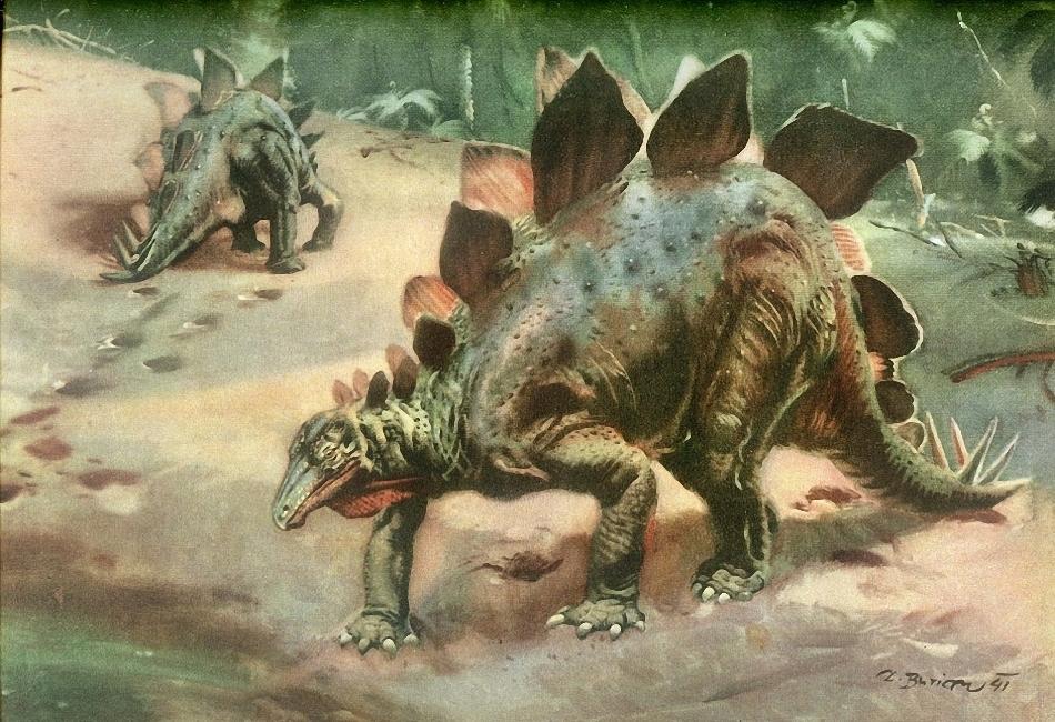 Картинки по запросу Стегозавры
