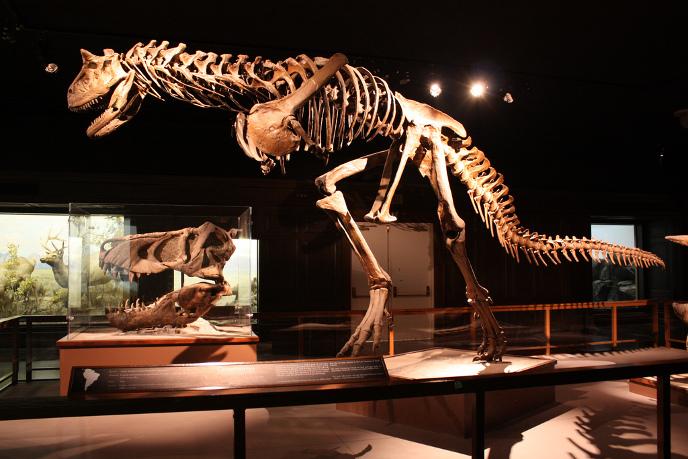 Скелет карнотавра