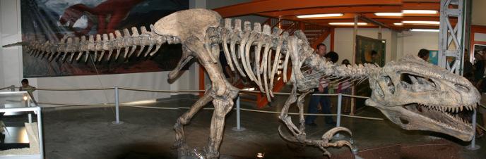 Скелет мегараптора