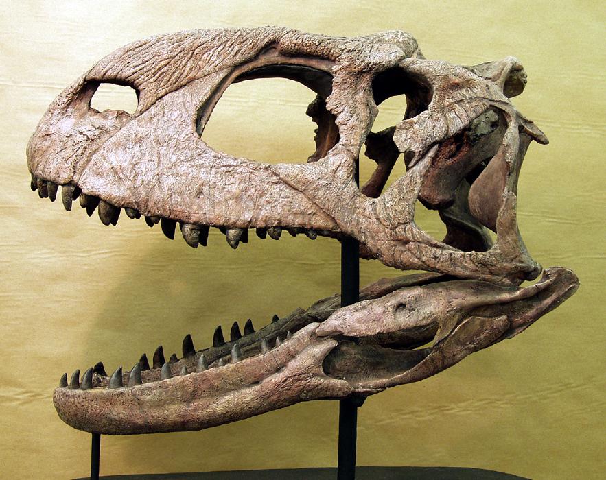 Вот это улов: рыбаки из России поймали голову огромного динозавра