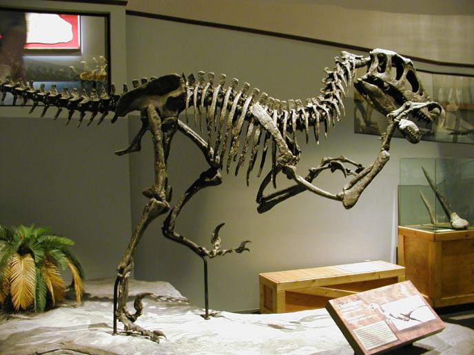 Скелет ютараптора