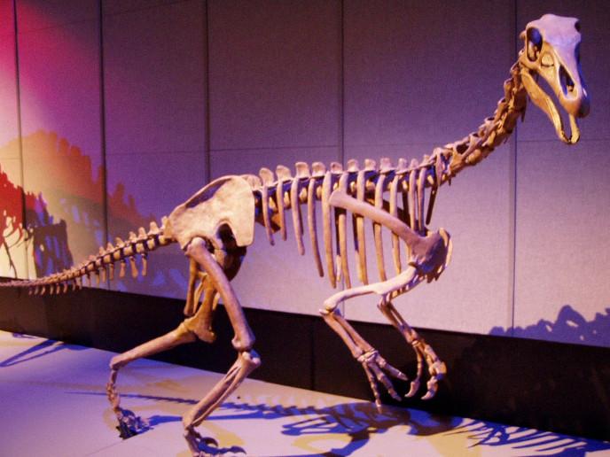 Алшазавр