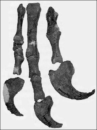 Эрляньзавр