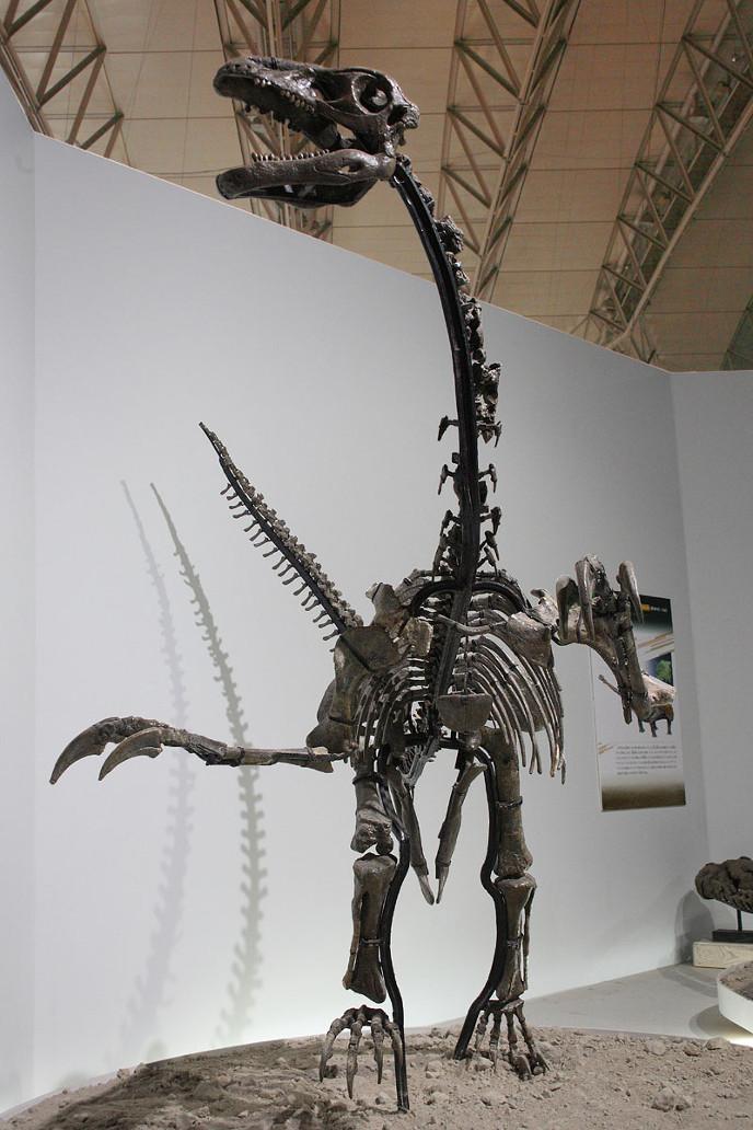 Скелет эрляньзавра