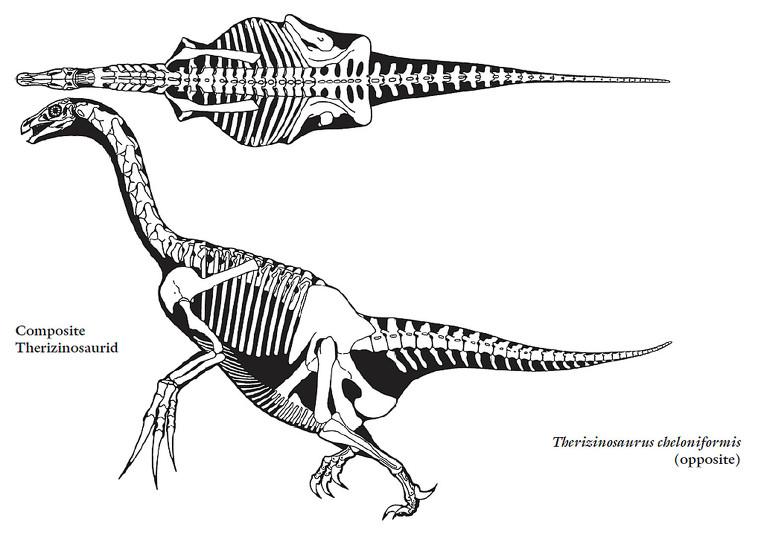 Spinosaurus und co - Seite 3 Therizinosaurus-skelet