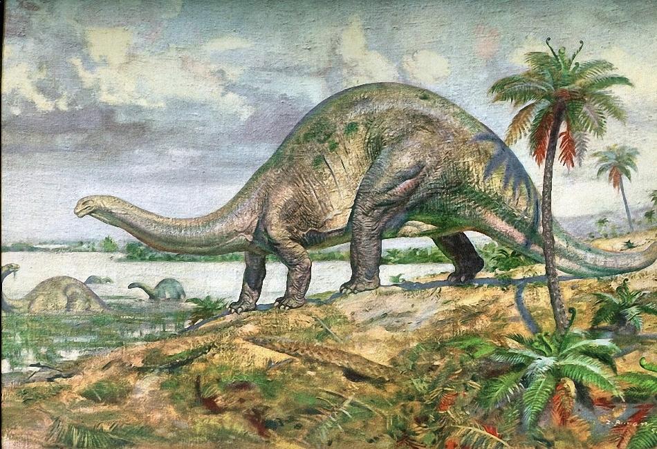Картинки по запросу Апатозавр
