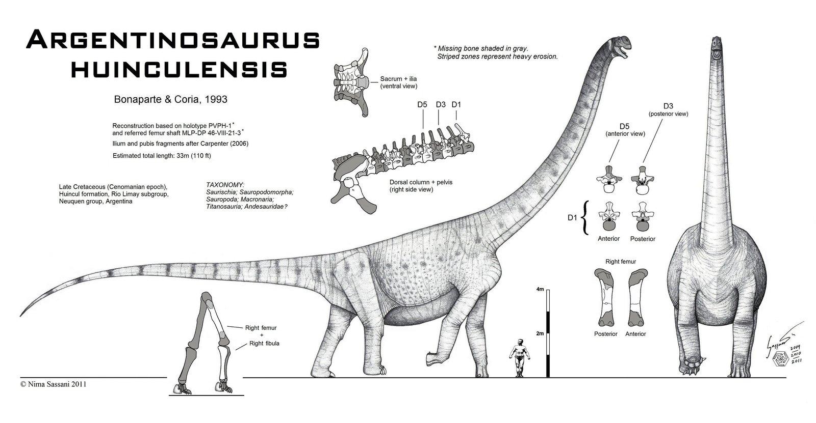 http://dinosaurs.afly.ru/ii/z/argentinosaurus-1.jpg