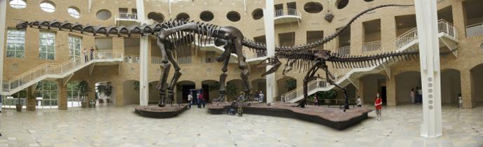 http://dinosaurs.afly.ru/ii/z/argentinosaurus-skelet-m.jpg