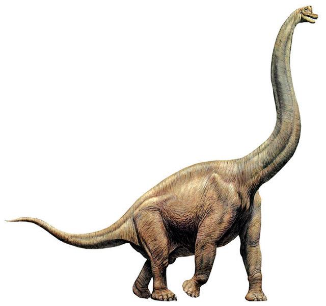 http://dinosaurs.afly.ru/ii/z/brachiosaurus-1.jpg