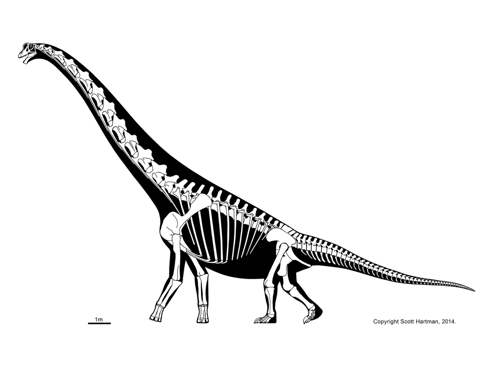 Картинки по запросу Скелет брахиозавра