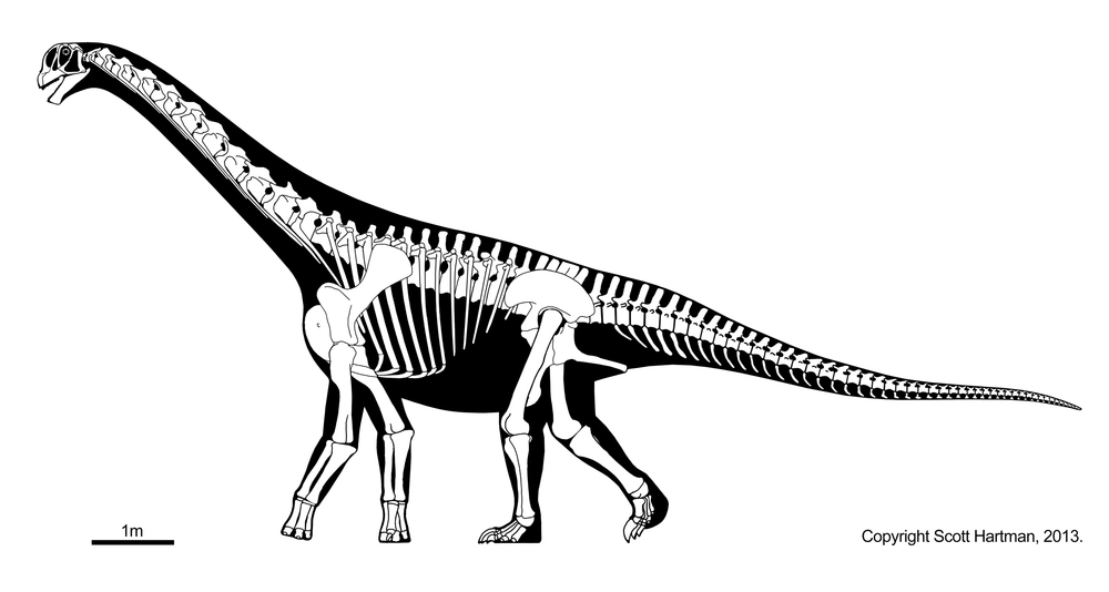 http://dinosaurs.afly.ru/ii/z/camarasaurus-skelet-2.jpg